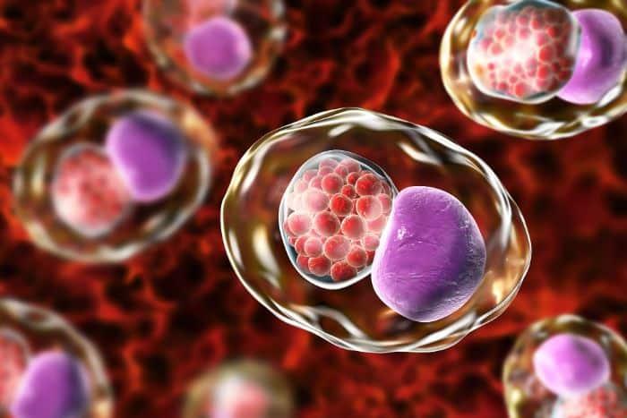 Chlamydia là bệnh do vi khuẩn Chlamydia trachomatis gây ra
