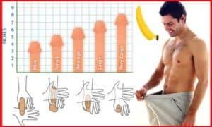 Kích cỡ và hình dáng bộ phận sinh dục sẽ khác nhau theo độ tuổi
