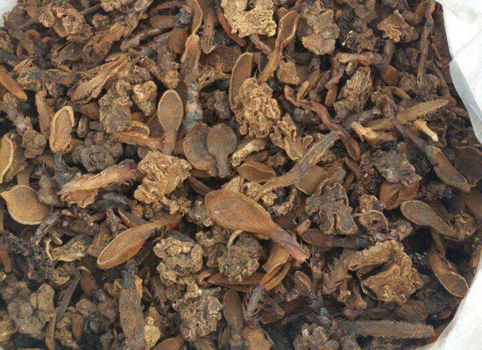 Nấm ngọc cẩu có tác dụng cường dương không