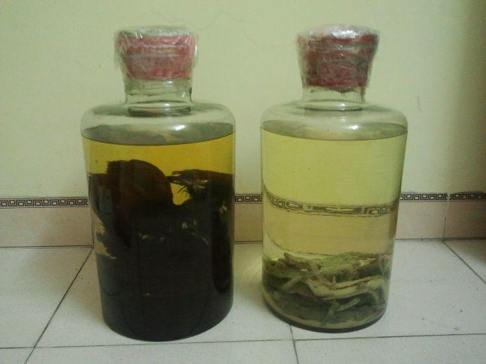Thực hư về việc sử dụng rượu Bìm Bịp chữa liệt dương 6