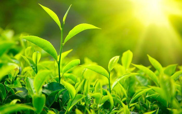 8 cách se khít vùng kín tự nhiên